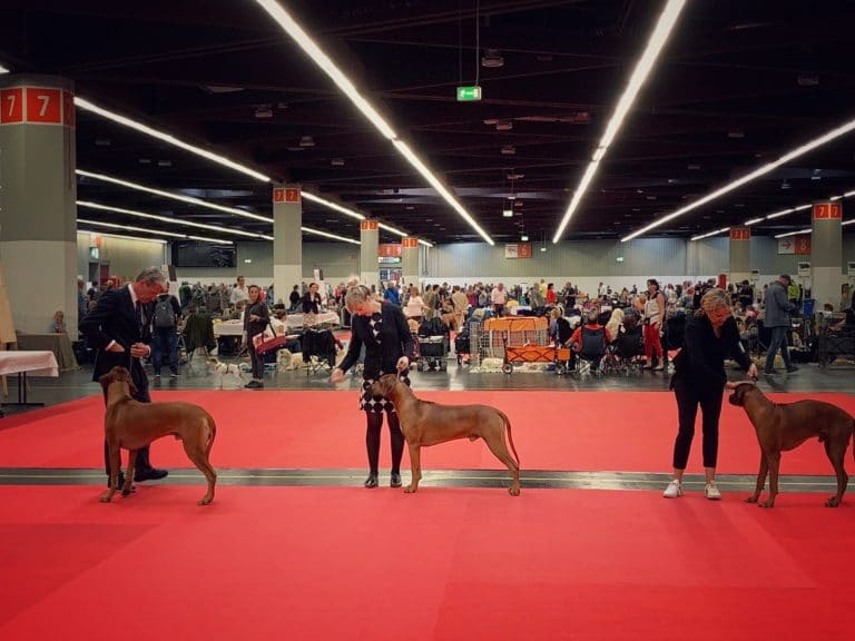 SHOWS: national and international dog show Nürnberg 13.07. & 14.07.2019