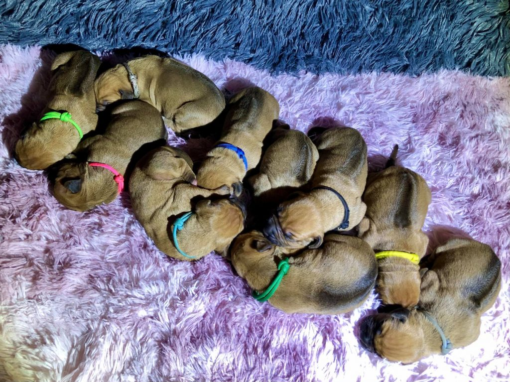 Puppies are born in France