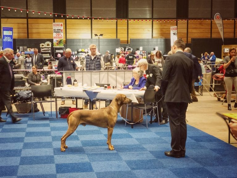 SHOWS: Martini dog show & Benelux Winner