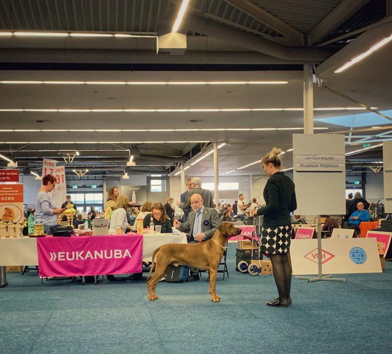 SHOWS: VDH-Europasieger Ausstellung Dortmund